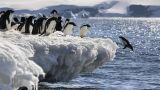 Floating igloos offer hope for threatened penguins